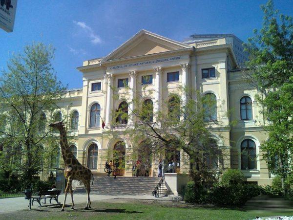 Muzeul Antipa, Bucuresti